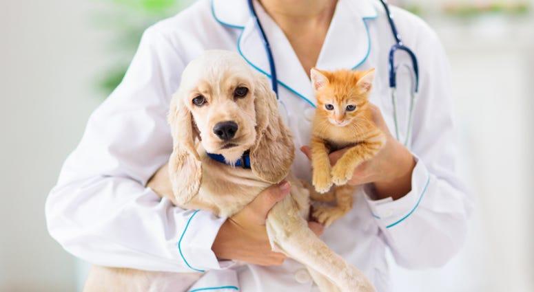 dog and cat at vet