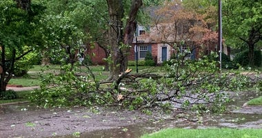 Downed branches in Grosse Pointe