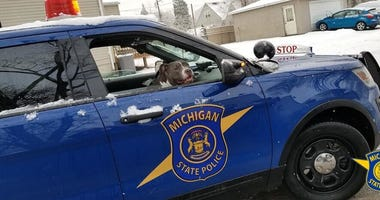 MSP dog in car