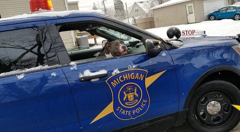 MSP dog in car