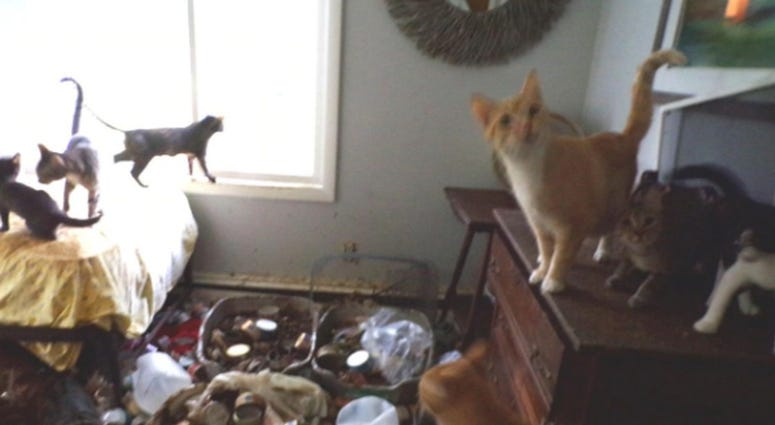 200 cats were rescued from a woman's house