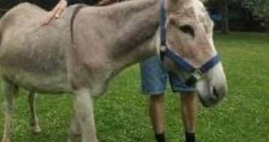 Chloe the donkey is missing in Michigan