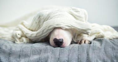 cold doggo