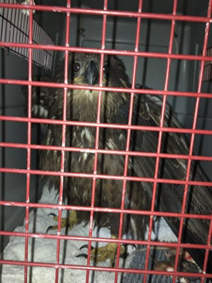 eagle shot down