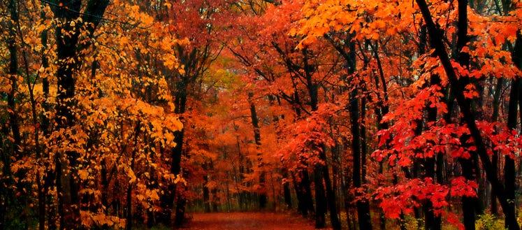 Fall color tour: Peak dates, best roads in Michigan in 2020 | WWJ Newsradio  950