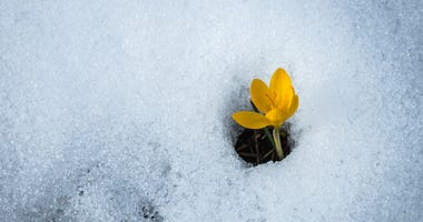 flower growing out of snow