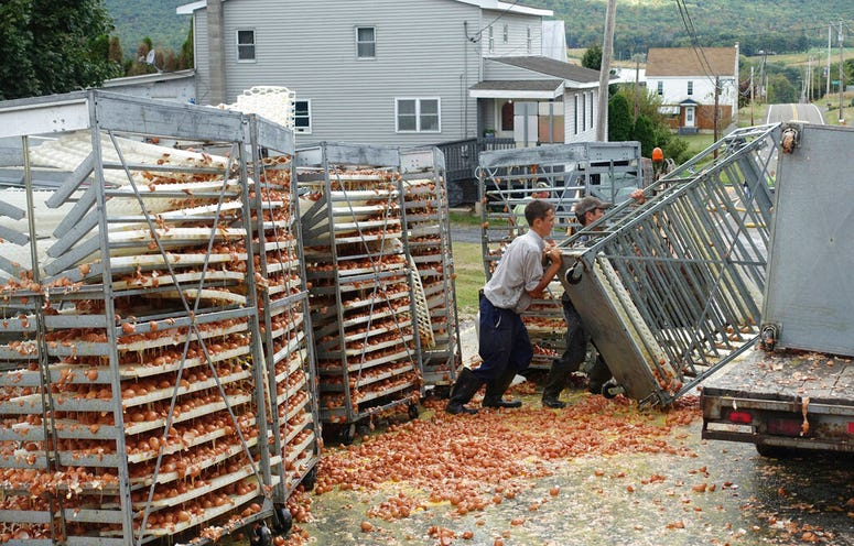 Crews work to clean tens of thousands of eggs