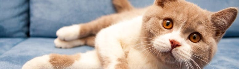 Cat Tests Positive for Coronavirus After Being Infected by Owner
