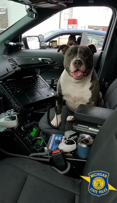 state police dog