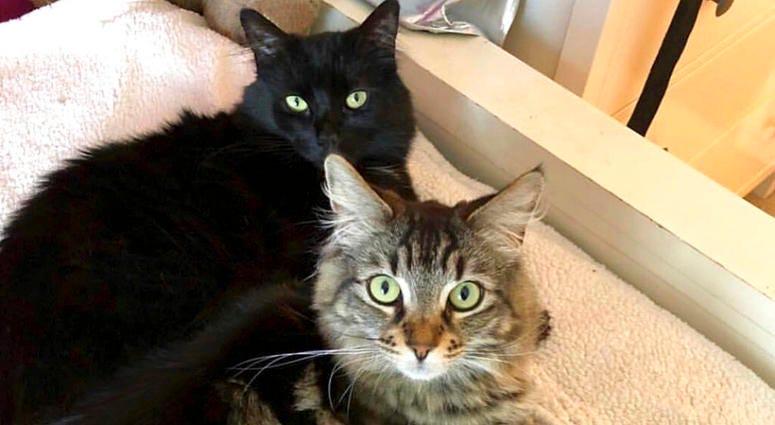 Tina and Louise