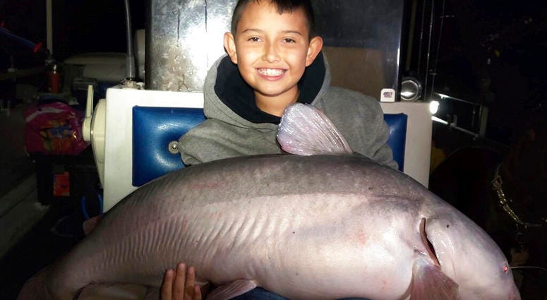 massive blue catfish