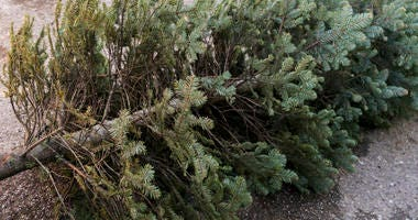 old christmas tree recycling