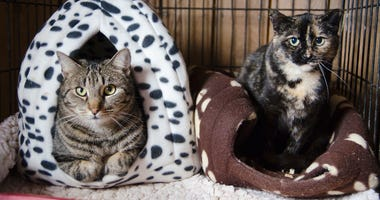 Homeless cats airlifted to new homes