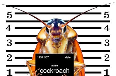 Cockroach mug shot