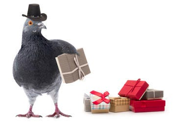 Pigeon in a cowboy hat with presents