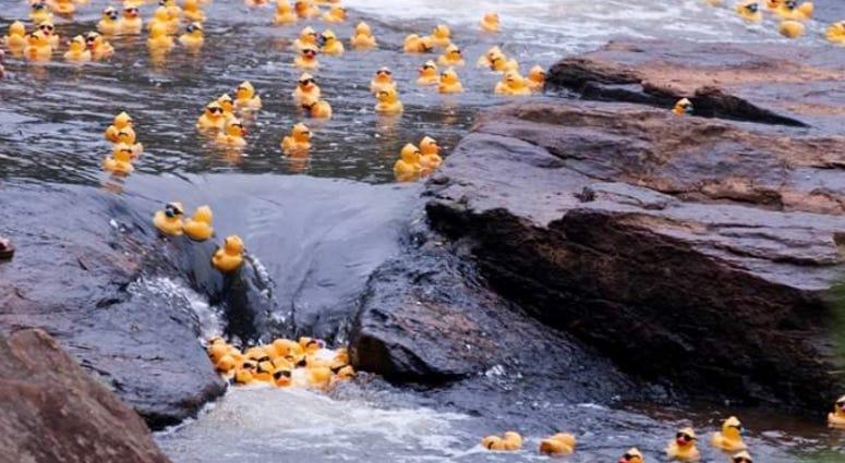 Reedy River Duck Derby Rescheduled