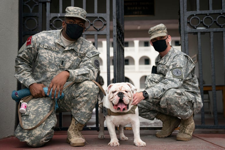 Citadel Mascot G3 with visits with cadets on his first day to begin living on campus Aug. 6 2020.JPG