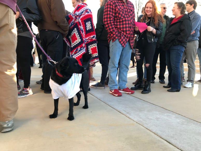 Dog Waits at Bernie Rally