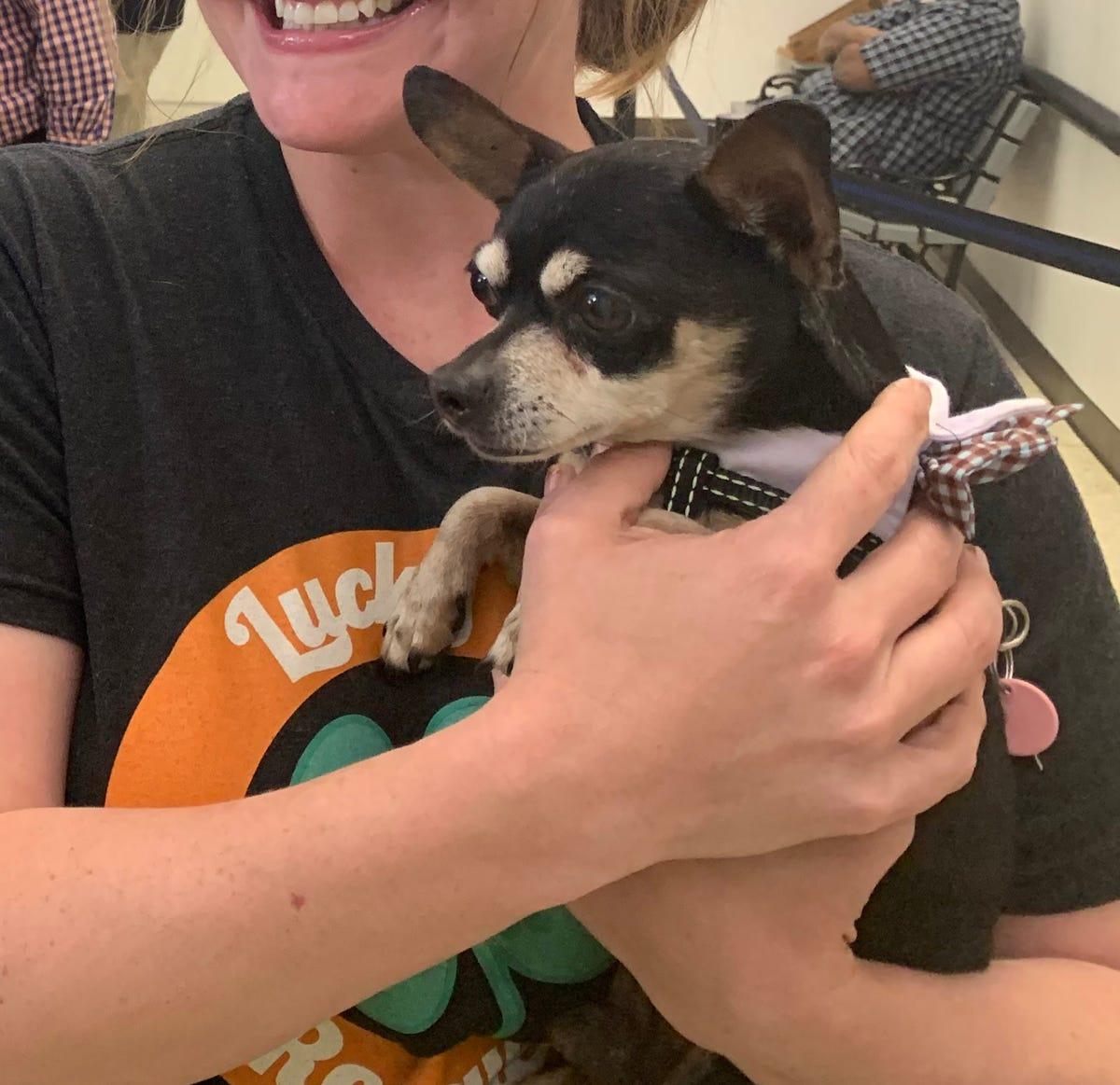 Stolen pup, Zoro, was recovered