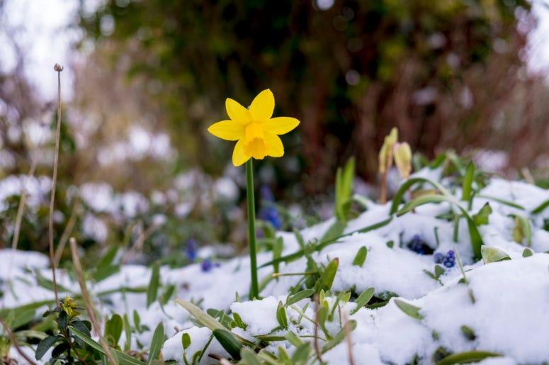 winter-flower-GettyImages-1033877590.jpg