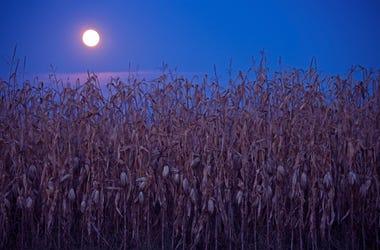 corn full moon